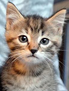 Gigi adoption