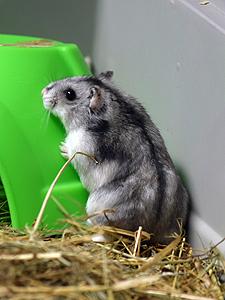 Hamsters 060118 3