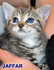 Jaffar adoption