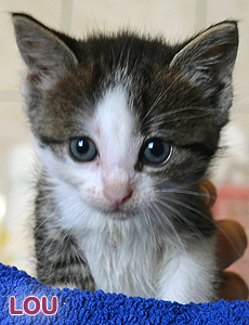 Lou adoption