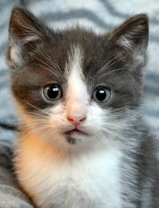 Lupin adoption