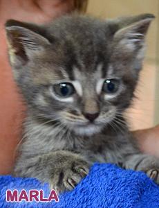 Marla adoption