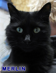 Merlin adoption 2