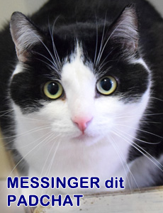 Messingerditpadchatgrosplan 1