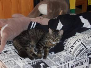 Minnie 201007 3