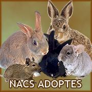 Nacs adoptes