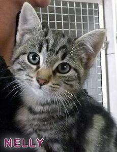 Nelly adoption