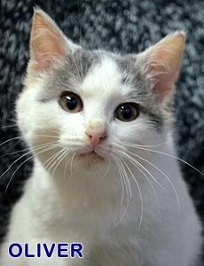 Oliver adoption
