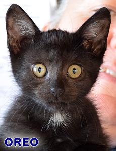 Oreo adoption
