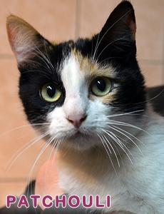 Patchouli adoption