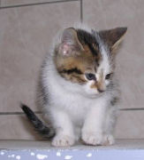 peou-adoption-1.jpg