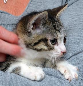 Pignette adoption