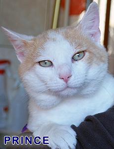 Princerb adoption
