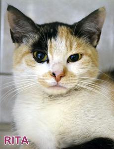 Rita adoption