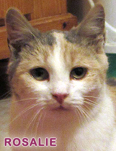 Rosalie adoption