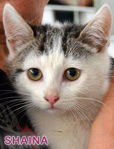 Shaina adoption