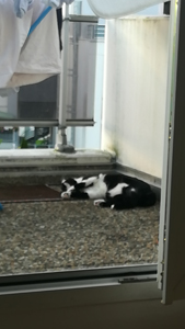 Snoopy 130218 1