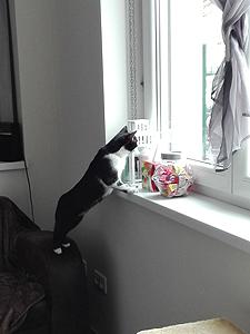 Snoopy 220517 6
