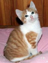 tartouff-adoption.jpg