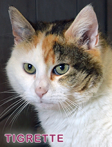 Tigrette adoption 2