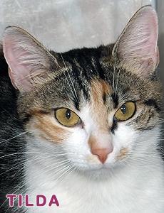 Tilda adoption