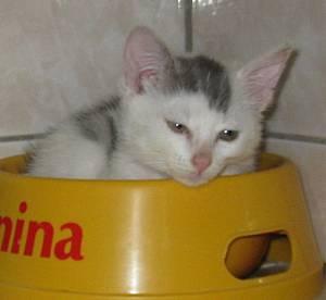timini-adoption.jpg