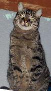 tomy-adoption-1.jpg