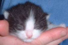 toupinet-adoption.jpg