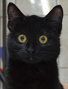 Whitney adoption