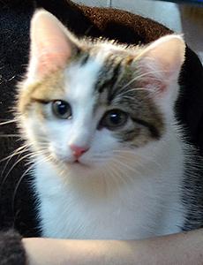 Zorba adoption